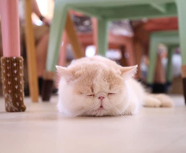 Cats Sleep