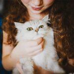 Do-cat-love-owner