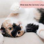 Cat-body-language