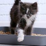 Get Rid off Cat Urine Smell