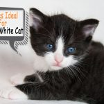 black and white cat name