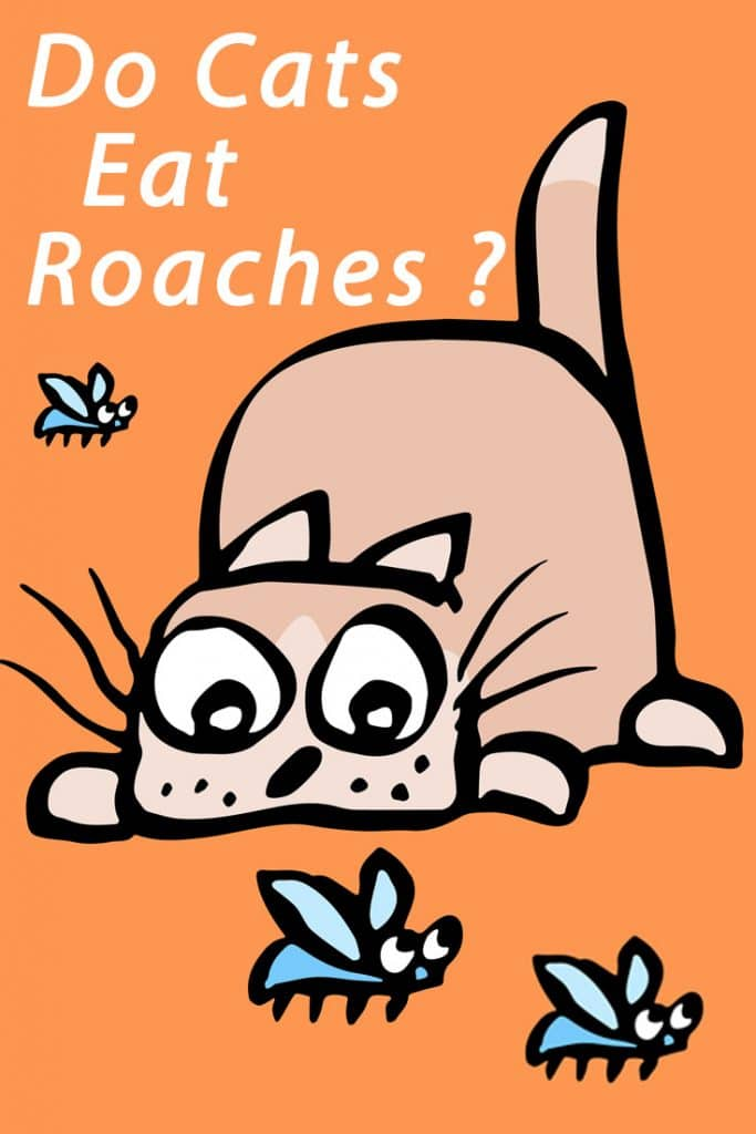 Do Cats Eat Roaches