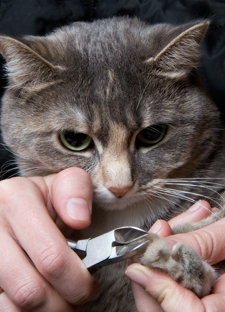 Trimming Cat Claws with Less Effort