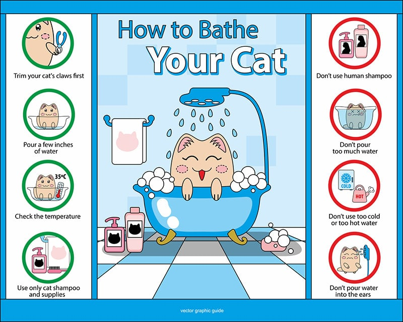 giving cat a bath