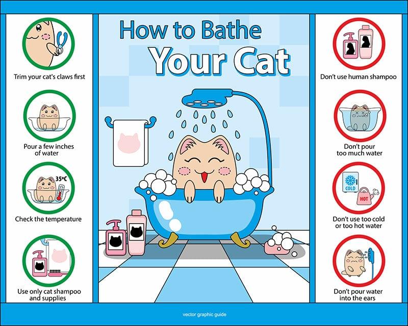 giving cat a bath