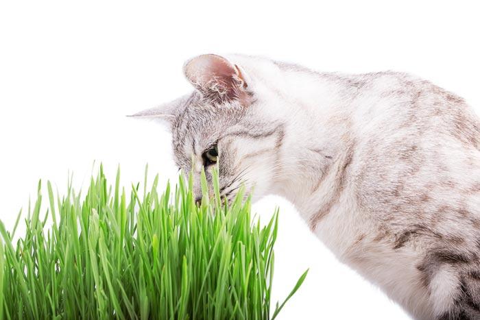 cat plant