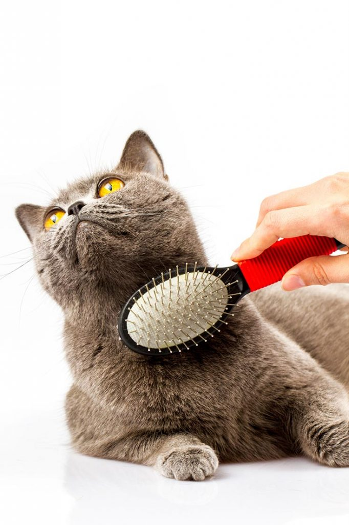 Why do Cats Cough up Hairballs?