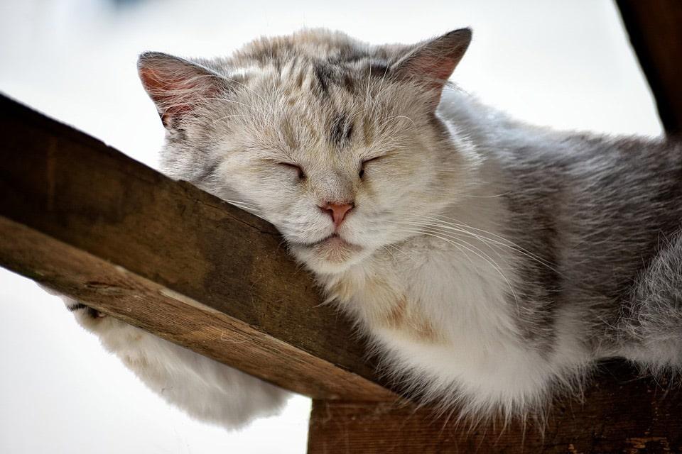 how many hours do cats sleep