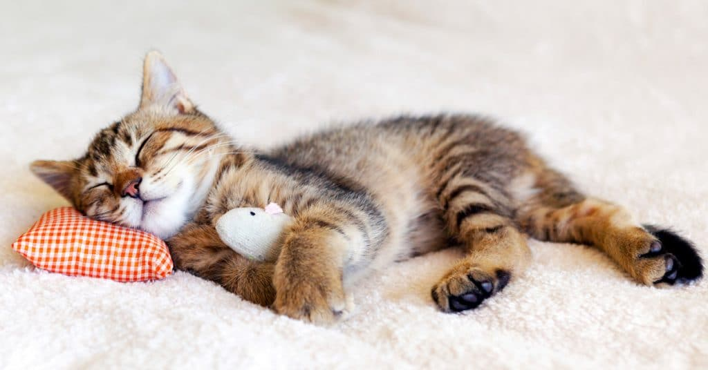 Why Do Cats Sleep So Much? Let's Find Out
