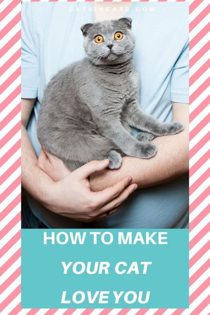 How To Make Your Cat Like You
