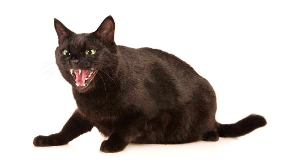 Cat Hissing, What does it Mean?
