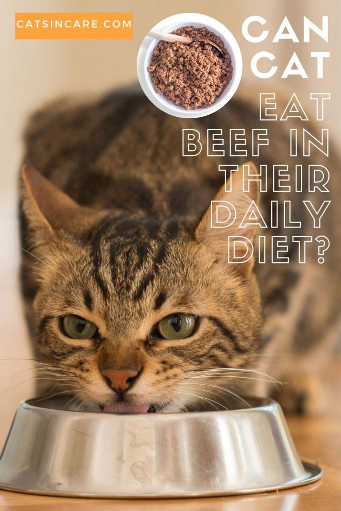 Can Cats Eat Beef