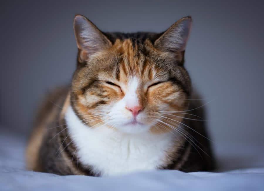 Symptoms of Cat Allergy
